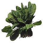 Organic Palco Spinach Seeds