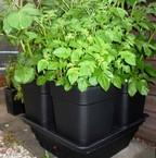 Quadgrow 18ltr Vegetable Planter