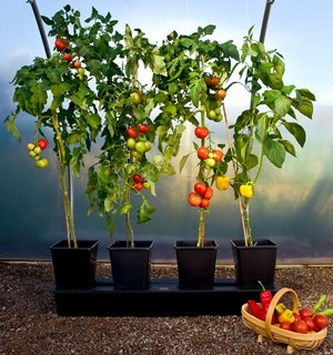 The Quadgrow Is A Fantastic Alternative To Growing Vegetables In Growbags Or Pots, Producing Bigger Harvests And Even Keeps Plants Watered For 14 Days