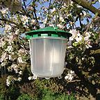 Replacement Lure - Plum Fruit Moth Trap