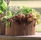 Salad & Herb Planter & Willow Surround