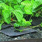 Strawberry Mulch Mats (Pack of 10)