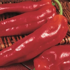 Sweet Pepper Long Red Marconi (3 Plants) Organic