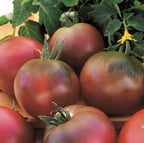 Tomato Black Russian (5 Plants) Organic