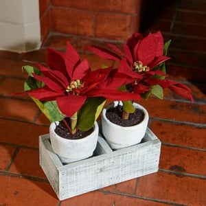 Twin Poinsettias in Ceramic Pots
