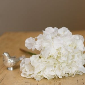 White Hydrangea Stem by Sia